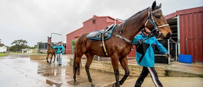 Horse-Training-South-Australia-Adelaide-Finniss-15